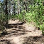 Glasson's Trail (237734)