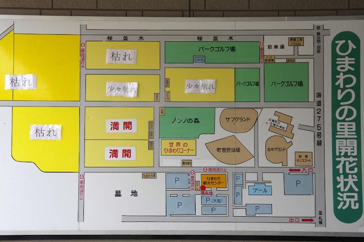 写真:ひまわりの里開花状況 8月25日(土)09:00
