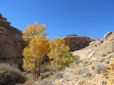 Yellow trees in the canyon