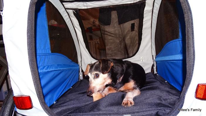 Modes de transport pour petits / vieux chiens qui fatiguent vite - Page 3 DSC02410
