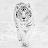 Martin Stapleton avatar image