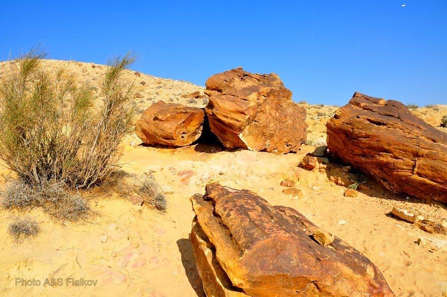 Окаменелые деревья в пустыне Негев.