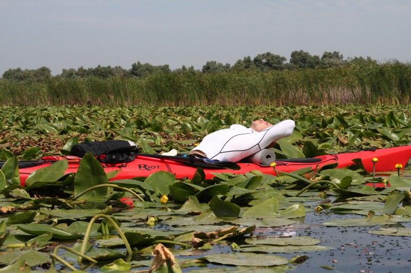 Delta Dunării nuferi stuf caiac vegetație lac Potcoava Silviu apă