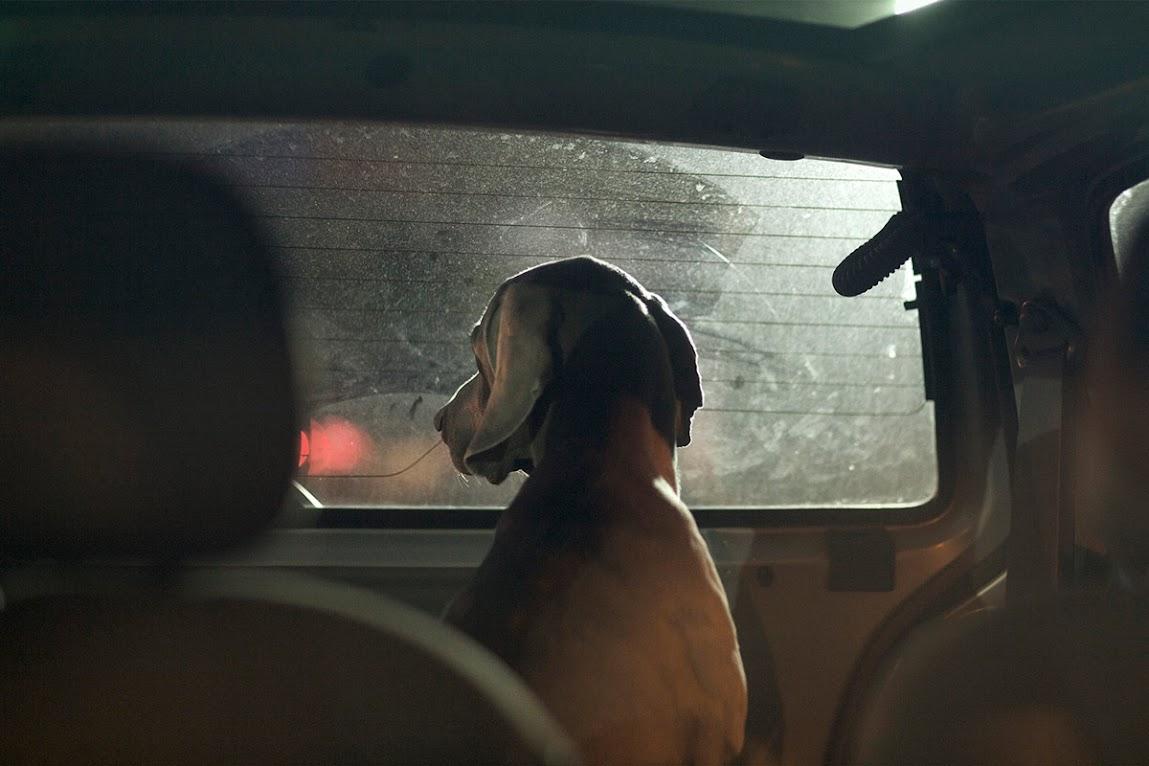 *被鎖在車內沉默的狗:攝影師Martin Usborne 黑暗呈現! 10