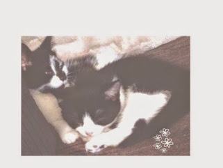 Meet my cats ♥