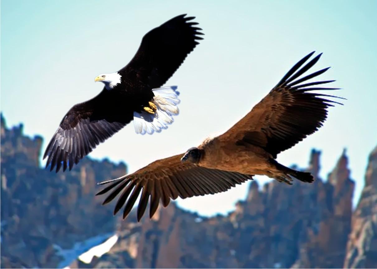 Resultado de imagem para duas águias voando