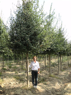 Listopadni drvored