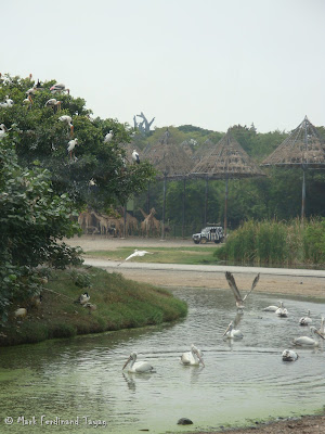 Safari World - Safari Park Bangkok Batch 2 Photo 4
