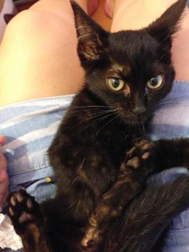 Yoko, la gata rescatada de la alcantarilla IMG_3937
