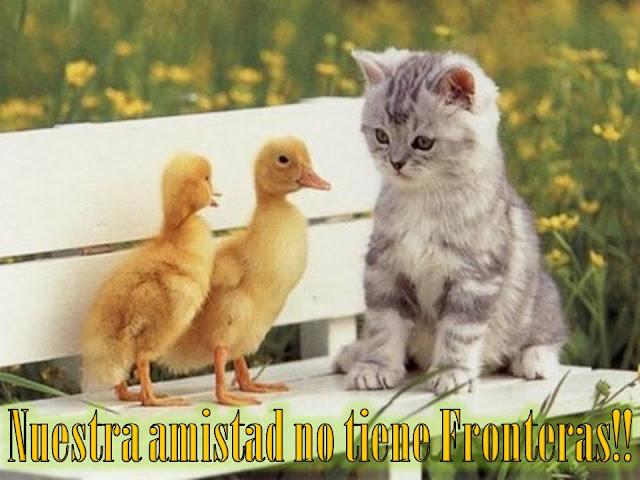 Postales de gatitos lindos