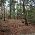 Gibbergong track near Lovers Jump creek crossing (117256)