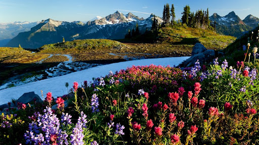 Alpine Meadow, Tatoosh Range, Mount Rainer National Park, Washington.jpg