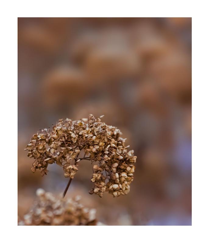 Winter Flora  - for Paul (jeeperman)