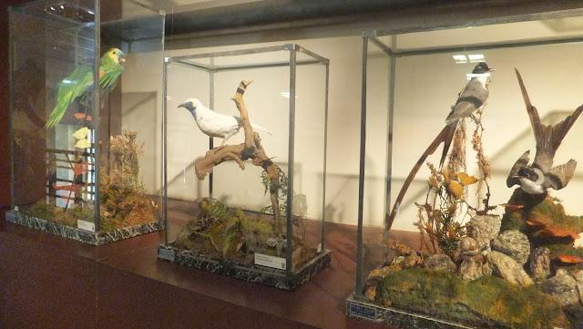 Museo Provincial de Ciencias Naturales Angel Gallardo, Rosario, Argentina, Elisa N, Blog de Viajes, Lifestyle, Travel