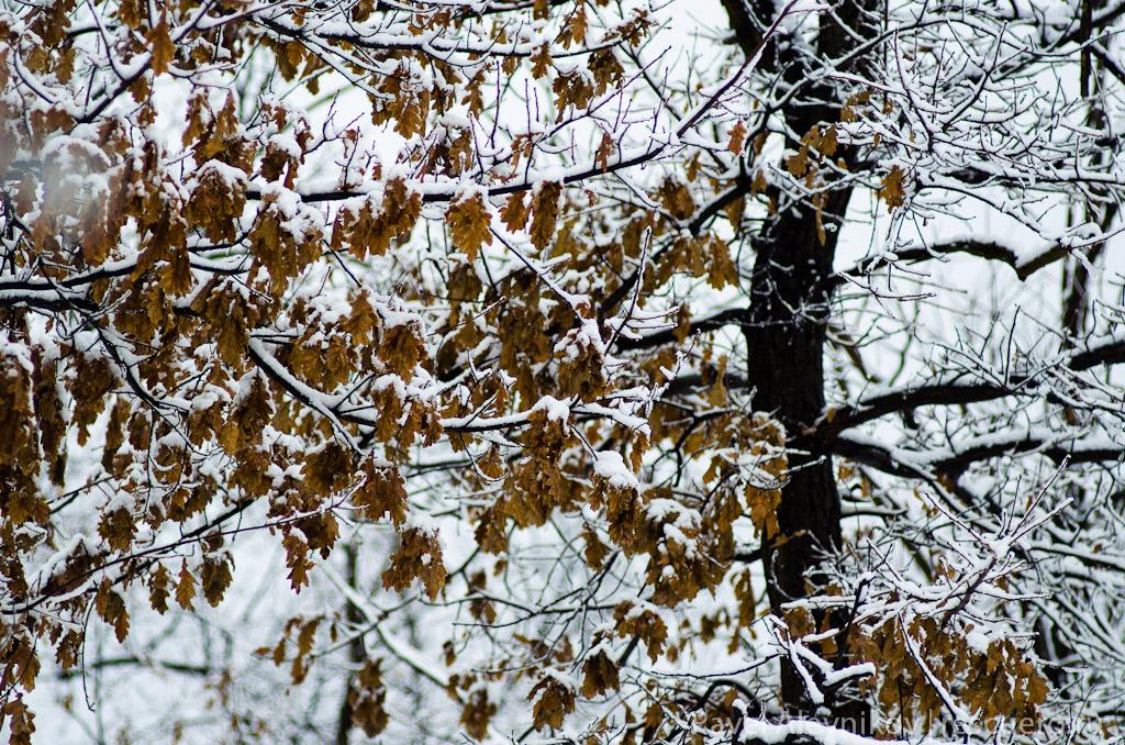 Зимний лес в Торезе, Кошелевская балка