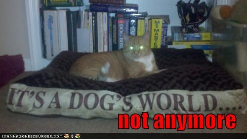photo of a cat laying on a huge pillow that says it's a dogs world