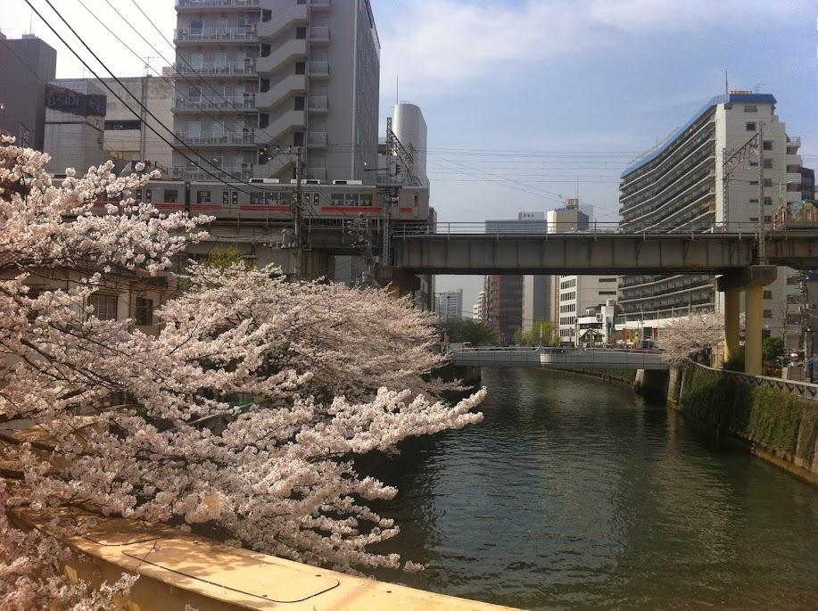 sakura meguro tokyo