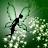 Viv Lopes avatar image