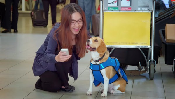 too cute dog sherlock got the priceless of service watch and youll be amazed