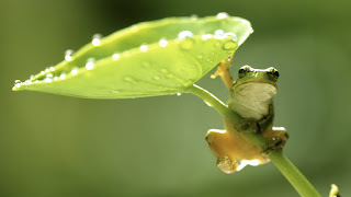 Hang On ! Little Green Frog Funny Nature Animals HD Wallpaper