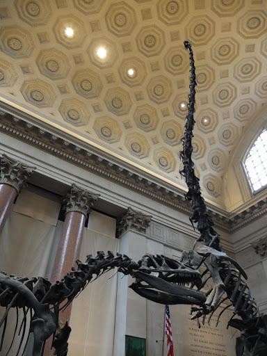 自然史博物館の入り口