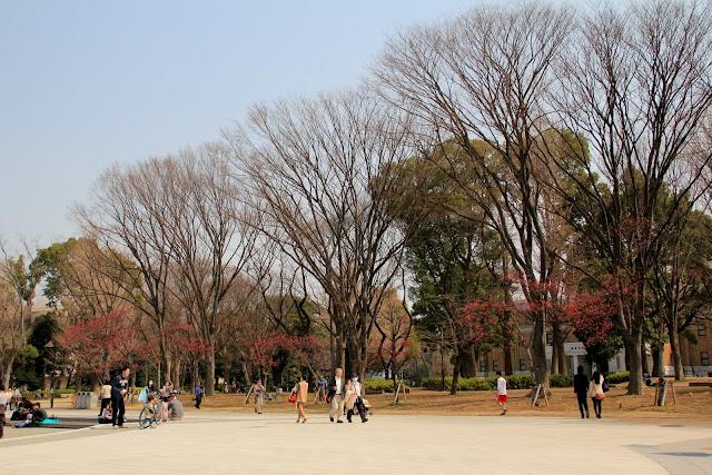 日本 東京 上野公園 櫻花