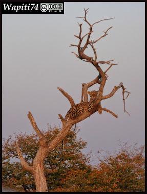 Balade australe... 11 jours en Namibie IMG_0348