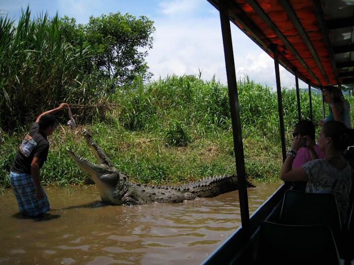 Questões e Fatos sobre Crocodilianos gigantes: Transferência de debate da comunidade Conflitos Selvagens.  - Página 2 29258378