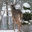Deanna O'Dette avatar image