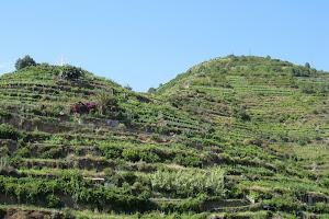 Hills in Cinque Terre