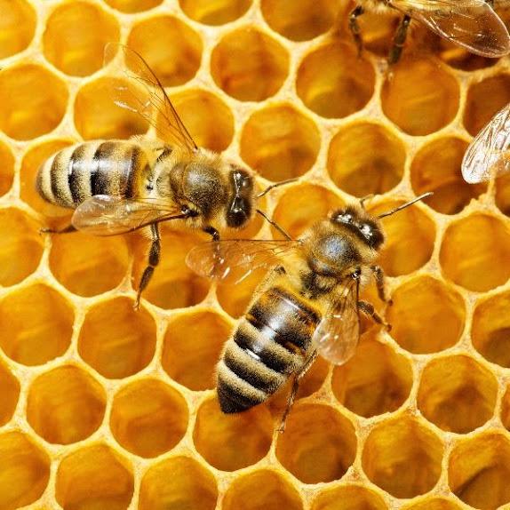 Крем для рук с пчелиным воском