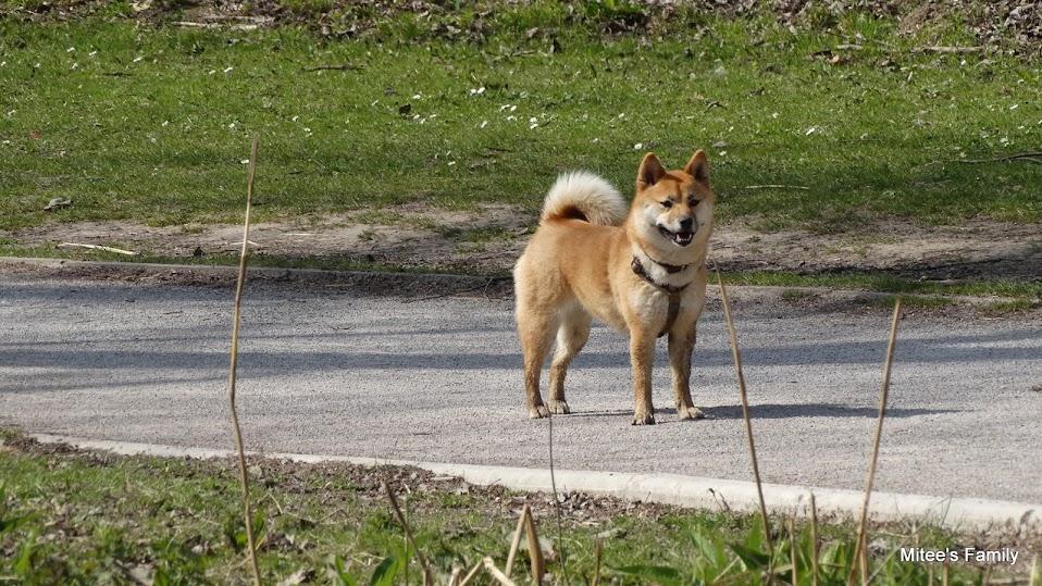 Balades canines en Nord (59)/Pas de Calais (62) - Boulogne-sur-Mer, Calais et Lille - Page 4 DSC01889