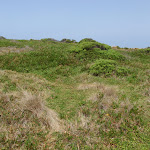 Bournda Island heath (107122)