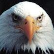 Eagle-Eye-360