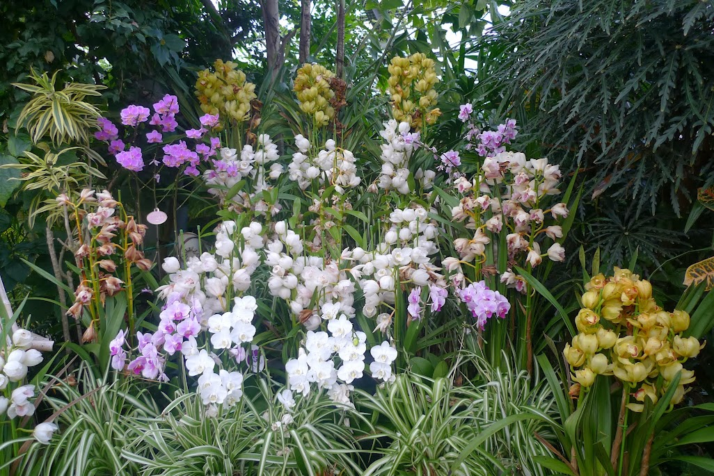 fleurs hakone