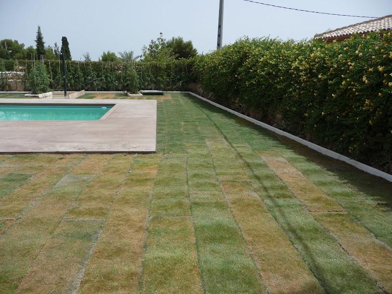 ejecución jardín diseño proyecto jardinería paisajismo san vicente alicante tepe césped bermuda