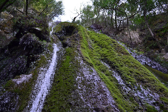 looking up the moss encrusted waterfall