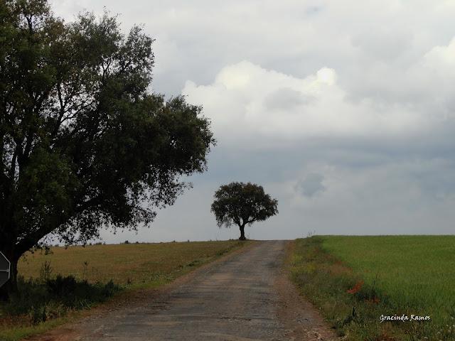 Marrocos 2012 - O regresso! - Página 4 DSC04797