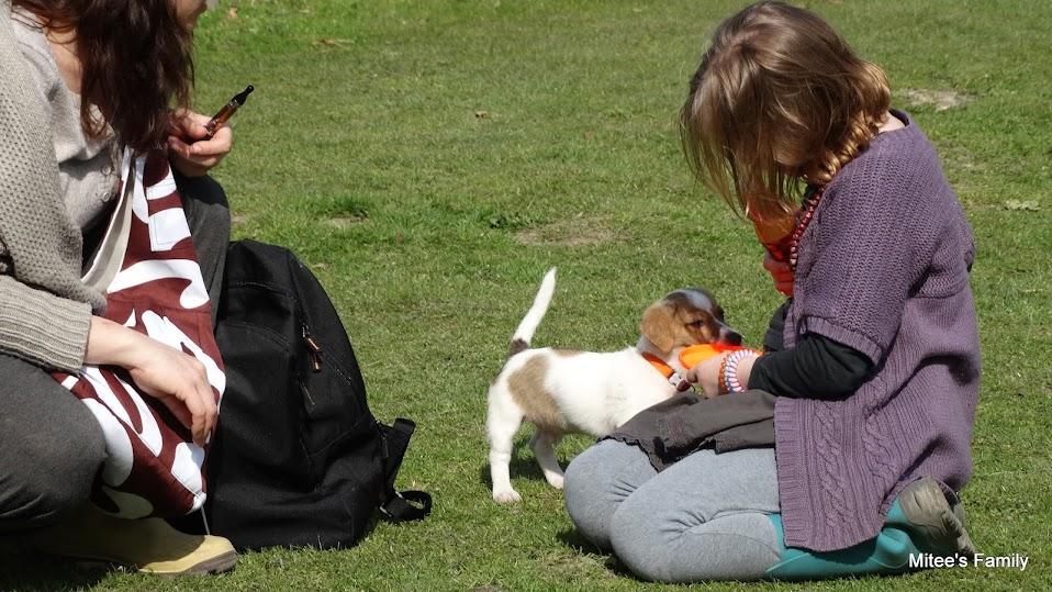 Balades canines en Nord (59)/Pas de Calais (62) - Boulogne-sur-Mer, Calais et Lille - Page 4 DSC01936