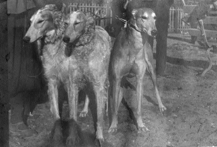 Ретро фото собак.  %25D0%2591%25D0%25B5%25D0%25B7%2520%25D0%25B8%25D0%25BC%25D0%25B5%25D0%25BD%25D0%25B8-30%25D0%25BF%25D0%25BC