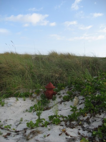 Fire hydrant returning to Nature