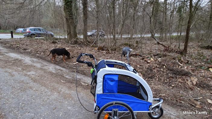 Modes de transport pour petits / vieux chiens qui fatiguent vite - Page 3 DSC02422