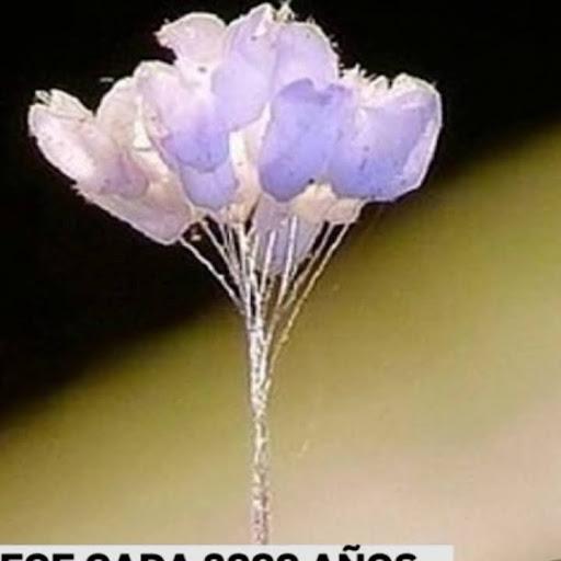 Antonia Naranjo