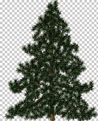 alberi074.jpg