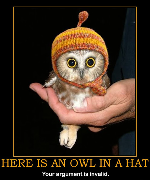 an owl in a hat