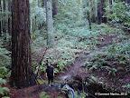 Michael's Summit Loop Trail