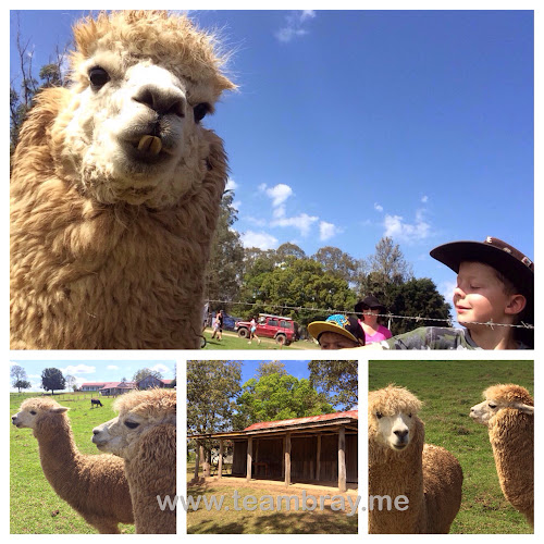 Kenilworth Homestead Alpacas