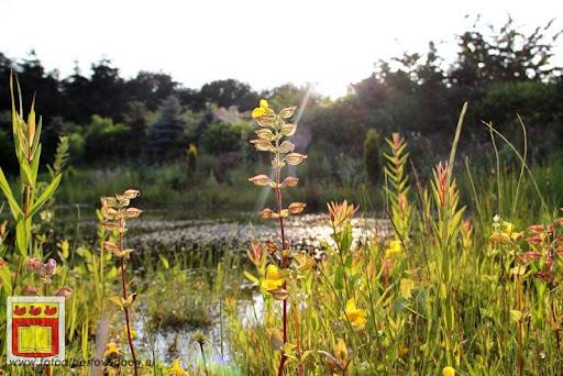Rolstoel driedaagse 26-06-2012 overloon dag 1 (46).JPG