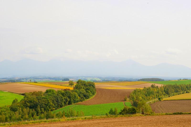 美瑛 ルベシベの丘 写真6