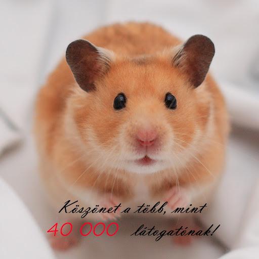 koszonet_40_000